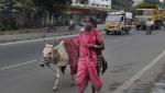 U Indiji napravljen čip od kravlje balege koji navodno štiti od zračenja telefona