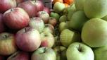 Srbija zatrpana jabukama, Pravilnik o izvozu zarobio ih u hladnjčama, a marketi ih uvoze iz Poljske
