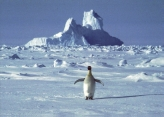 Na Antarktiku rekordnih 20 stepeni Celzijusa u februaru