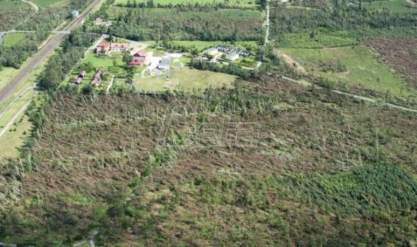 Poljska će do 2019. sklanjati drveće koje je oborila oluja