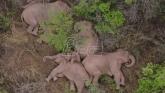 Krdo slonova u Kini ide ka jugozapadu zemlje