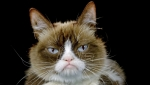 Preminula internet senzacija Nadurena mačka (Grumpy Cat) (VIDEO)