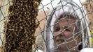 Naučnici skreću pažnju na problem nestajanja insekata