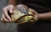 Vijetnam u strahu od korona virusa zabranio uvoz i trgovinu divljim životinjama