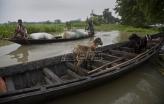 Najmanje 180 žrtava monsuna u južnoj Aziji (VIDEO)