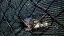 Kiparska policija zalenila 'špijunski' kombi, istražuje izraelskog vlasnika