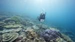 Australija zbog turizma sprečila UNESKO da njen Veliki koralni greben proglasi za ugrožen