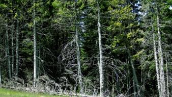 Na Fruškoj gori organizovane ekološke akcije povodom Dana šuma