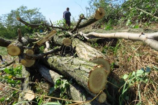 Agencija za energetiku: U Srbiji najjeftinije grejanje na drva, najskuplje na struju