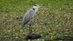 Počinje zimski popis ptica u Srbiji