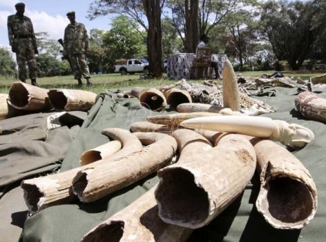 Afrika podeljena oko prodaje slonovače