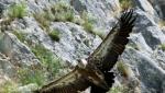 Razmatra se zabrana letova iznad Uvca gde žive zaštićeni orlovi