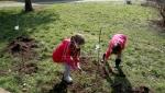 U Vojvodini još 170.000 bagrema, topole i vrba