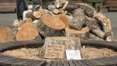 Zelenilo sutra sadi 300 stabala na Kalemegdanu i Ušću