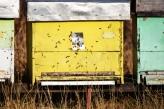 'Muzej mrtve prirode' u Beogradu upozorava na poslednice nestanka pčela