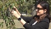 Telenor fondacija sadnjom japanske trešnje najavila akciju 'Posadi svoj hlad' (FOTO/VIDEO)
