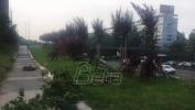 Beograd:  Huligani uništili sadnice kod Geneksa