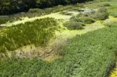 Uskoro proglašenje velikog Rezervata biosfere Mura-Drava-Dunav