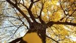 U nedelju širom Srbije sadjenje 50.000 stabala