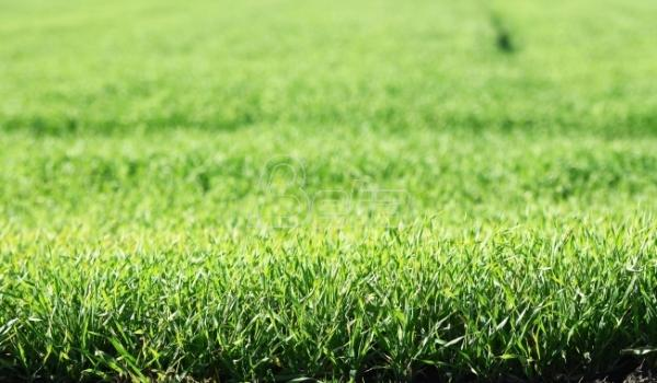 Saković: Uvoz kvalitetne pšenice iz Madjarske neće oštetiti domaće proizvodjače