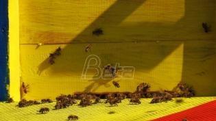 Pčelari stariji od 65 godina traže dozvolu za obilazak pčelinjaka