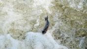 VOICE:  Šteta od ribokradje najmanje dva miliona evra, ribokradice zaštićene