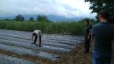 Šabačka jagoda u Goraždevcu