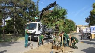 Zelenilo Beograd posadilo - palme