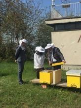 Agencija za zaštitu životne sredine pravi pčelinjak u svom dvorištu