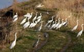 VOICE:  Pesticid furadan uništava zaštićene vrste ptica