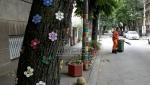 Ulica Ive Lole Ribara jedinstvena u Nišu zbog ukrašenog drvoreda lipa (FOTO)