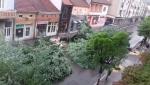 NVO: Seča drvoreda u Aleksincu izvršena bez odobrenja nadležnih organa