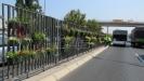 Cveće na razdelnoj ogradi beogradskog bulevara protiv buke i zagadjenja