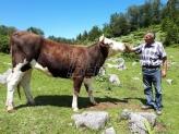 Na Suvoj planini sve popularniji tradicionalni uzgoj krava i konja (FOTO)
