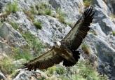 MUP Srbije povodom stradanja ptica saopštio da nije nadležan za kontrolu preleta helikoptera