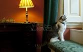 Mačak Lari - deset godina na funkciji u rezidenciji britanskog premijera (VIDEO)