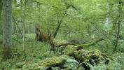 Poljska najavila da će poštovati odluku suda EU o zabrani seče Bjalovješke prašume