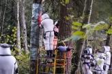 Uklonjeno gnezdo stršljenova ubica u SAD (VIDEO)