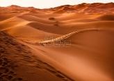Pustinja Sahara bila močvara prepuna najstrahovitijih dinosaurusa
