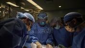 Američki hirurzi presadili svinjski bubreg čoveku