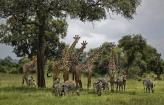 UN:  Milion ugroženih vrsta na planeti, opstanak ljudi u pitanju (VIDEO)