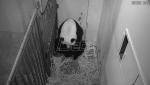Okotilo se mladunče pande u Vašingtonu