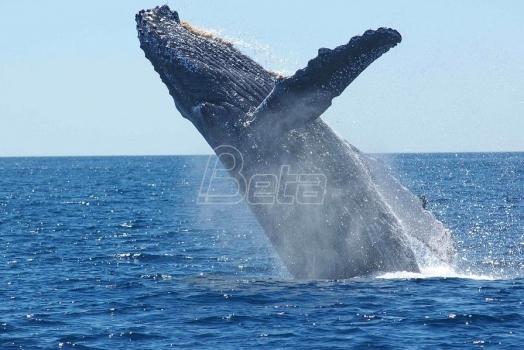 Kit udario brod u Australiji, ima povredjenih