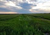 Vode Vojvodine:  Zagadjen kanal Bečej-Bogojevo