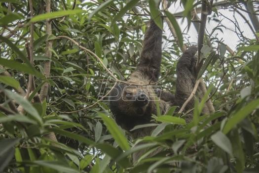 U Meksiku otkrivena vrsta praistorijskog lenjivca
