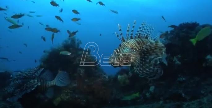 Sedam milijardi dolara za zaštitu mora i okeana (VIDEO)