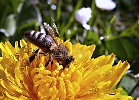 Pomoć pčelarima u borskom kraju