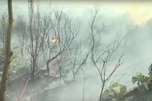 Oko 750 hektara šuma izgorelo u požarima u Francuskoj