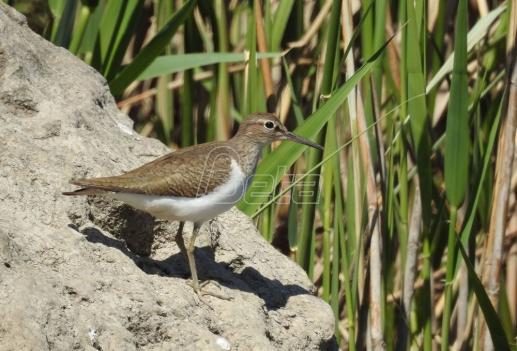 Više od dva miliona ptica ubijeno na Kipru prošle jeseni