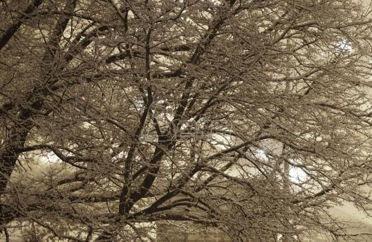 Zimski raspust u Medvedji produžen do 16. janura